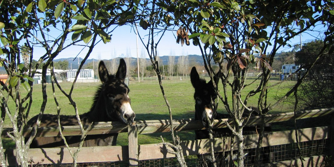 Sonoma Donkeys by Kelley Eling, Marin County Realtor