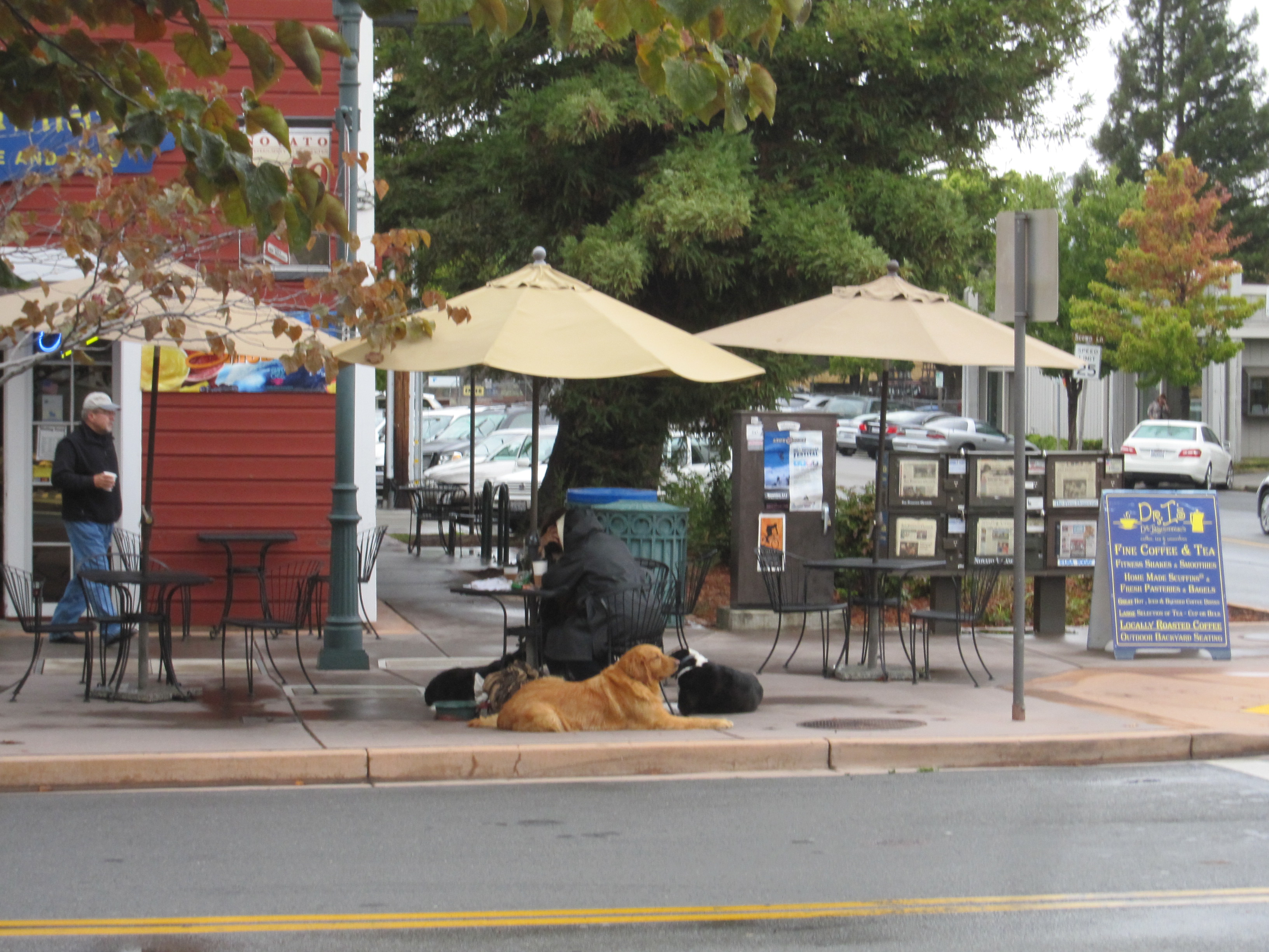 Dr Insomnia S On Grant Avenue In Downtown Novato By