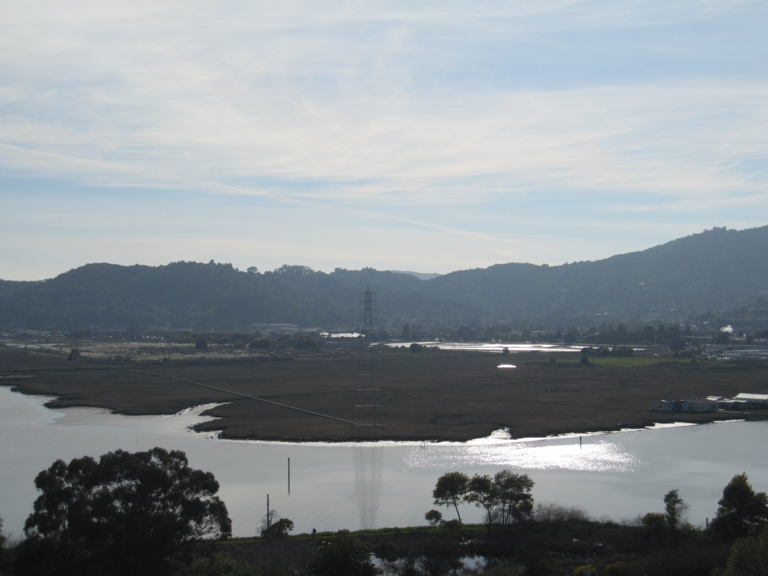 Overlooking The Marsh at Larkspur Landing by Kelley Eling, Marin County Realtor