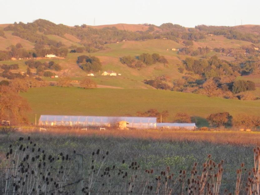 Petaluma Hill Road by Kelley Eling, Marin County Realtor