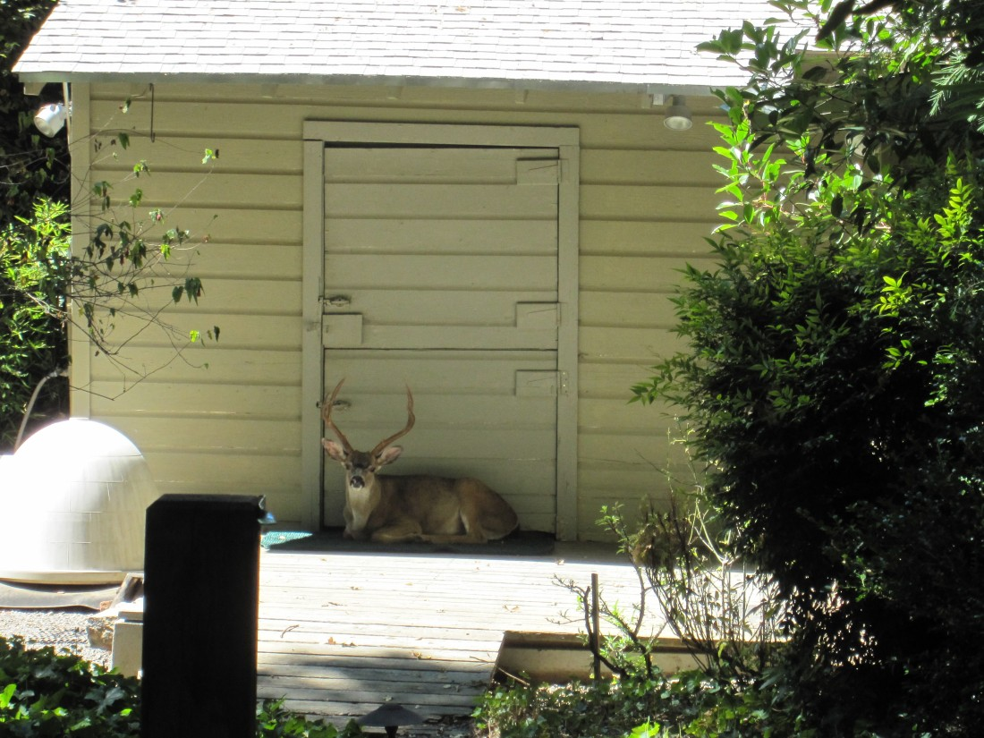 Deer In The Shade Of Fairfax Home by Kelley Eling, Marin County Realtor