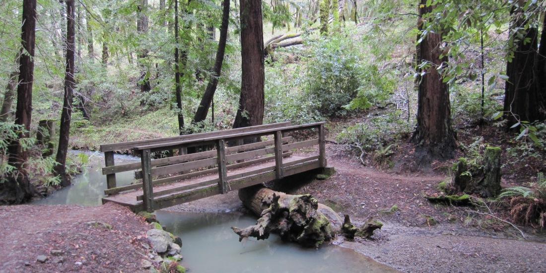 Foot Bridge Near Phoenix Lake by Kelley Eling, Marin County Realtor