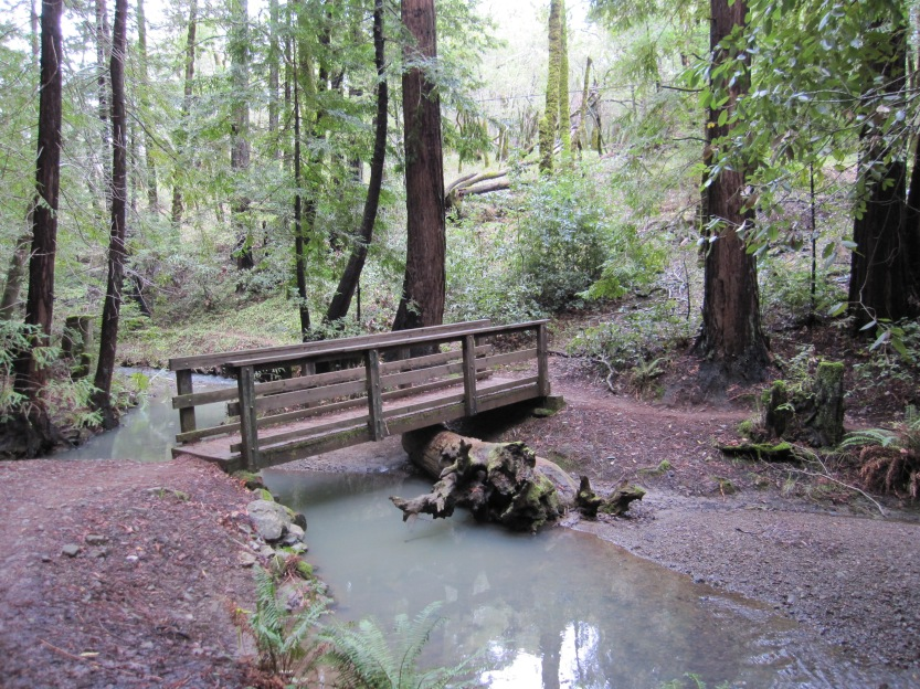 Foot Bridge Near Phoenix Lake by Kelley Eling, Marin County Realtor