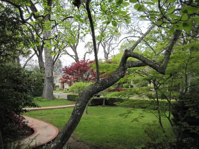 Yolanda Park Neighborhood in San Anselmo by Kelley Eling, Marin County Realtor