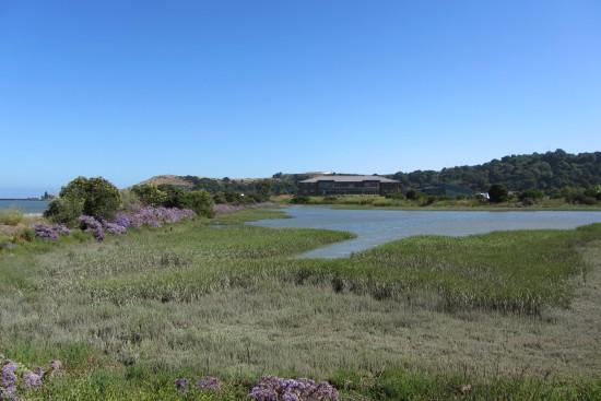San Rafael Shoreline Office Park by Kelley Eling, Marin County Realtor