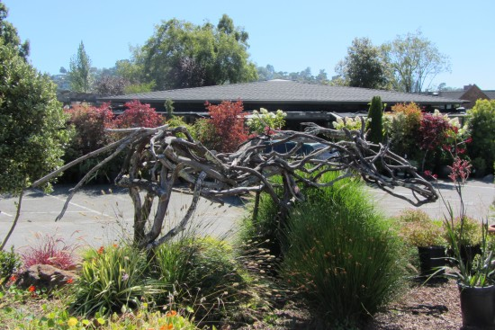 Bayside Garden Center in Tiburon by Kelley Eling, Marin County Realtor