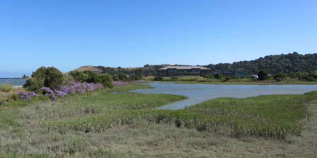 Shoreline Office Park in San Rafael by Kelley Eling, Marin County Realtor