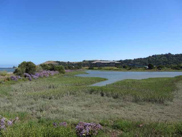 Shoreline Office Park in San Rafael by Kelley Eling, Marin County Realtor