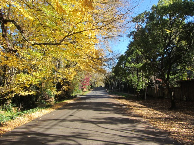 Late Fall on Lagunitas Road in Ross by Kelley Eling, Marin County Realtor