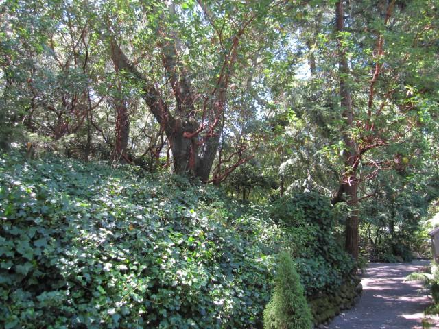 Fairfax Hillside Neighborhood by Kelley Eling, Marin County Realtor