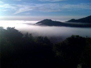 19 fog