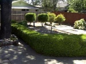 4 backyard