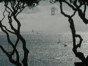fog view