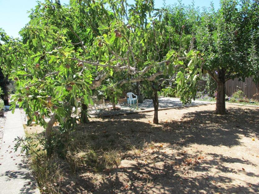 18 back yard fruit trees